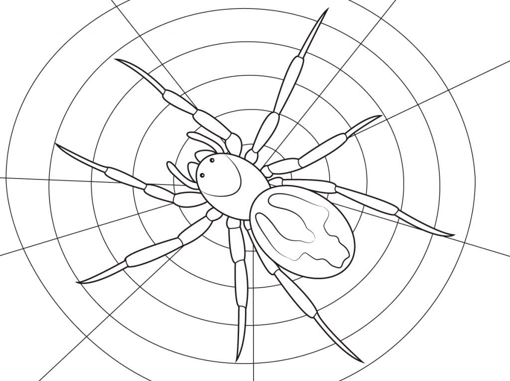 1024x764 Lace Webbed Spider Free Coloring Pages