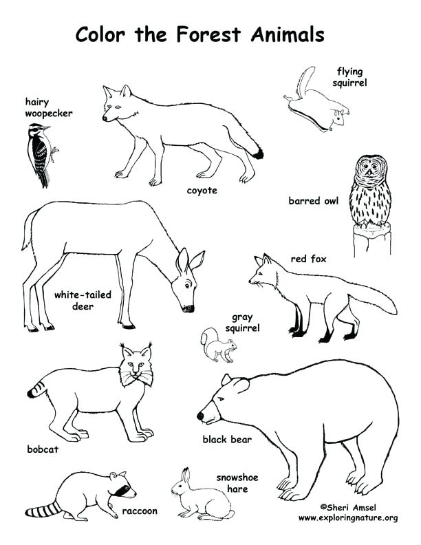 Land Animals Coloring Pages At GetDrawings Free Download
