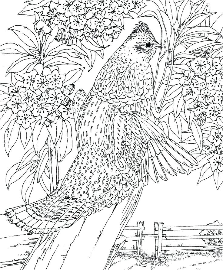 736x893 Landscape Coloring Books For Adults