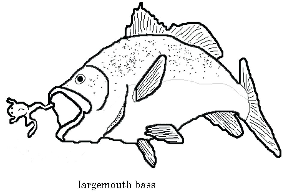 975x641 Bass Coloring Pages Sea Predator Striped Bass Fish Coloring Pages
