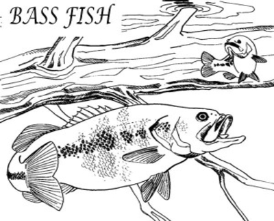 400x322 Bass Fish Jumping Coloring Pages Drawing Stripped