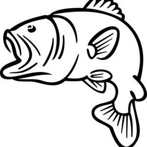 300x300 Bass Fish Jumping Outline Sketch Coloring Page Brenda