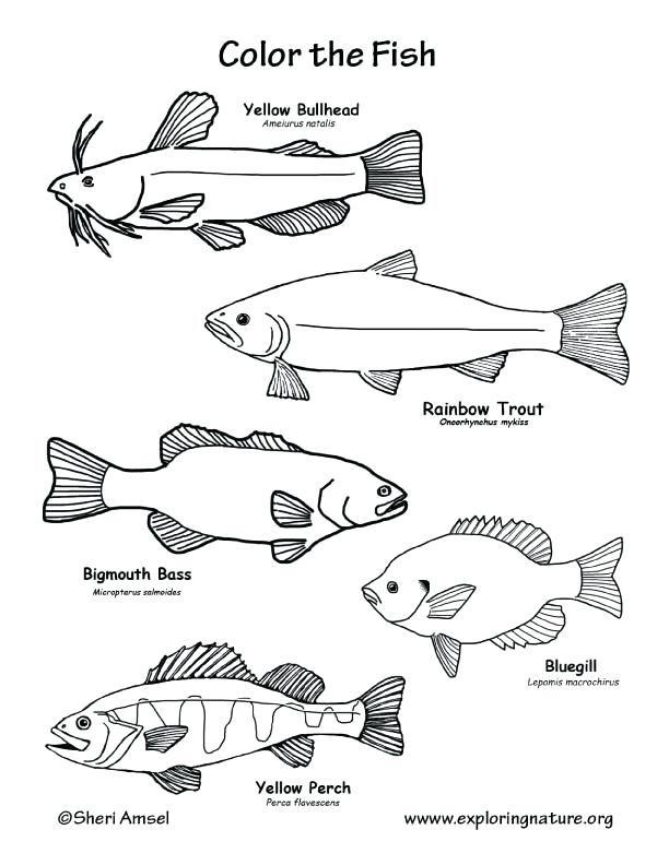612x792 Fish Coloring Pages