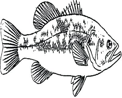 400x322 Bass Fish Coloring Pages