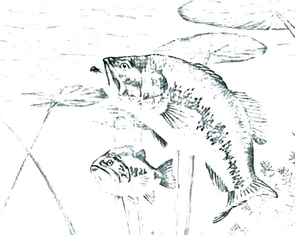 600x477 Bass Coloring Pages Bass Fish Sniper Bass Fish Coloring Pages
