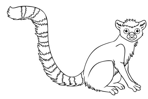 600x403 Ring Tailed Lemur Coloring Pages