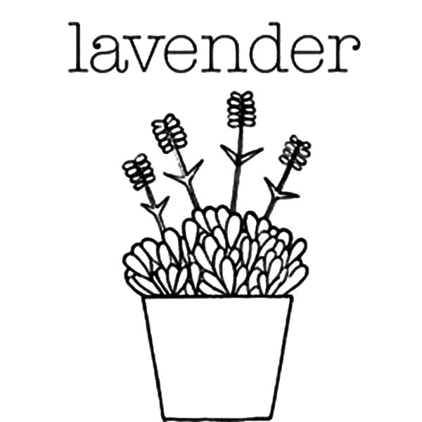 600x600 Lavender Flower In Pottery Coloring Pages