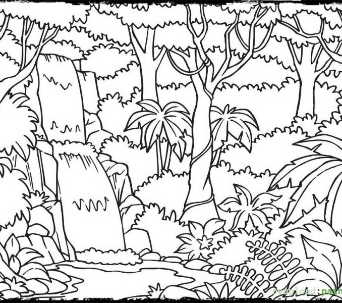 photo about Layers of the Rainforest Printable titled Levels Of The Rainforest Coloring Website page at