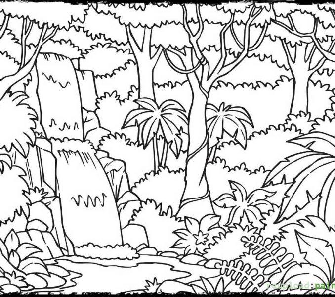 678x600 Printable Rainforest Pictures Tropical Rainforest Coloring Pages