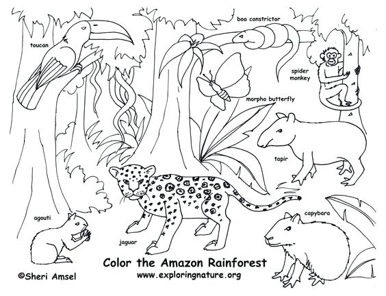 564x432 Rainforest Coloring Page Amazon Coloring Page Free Download