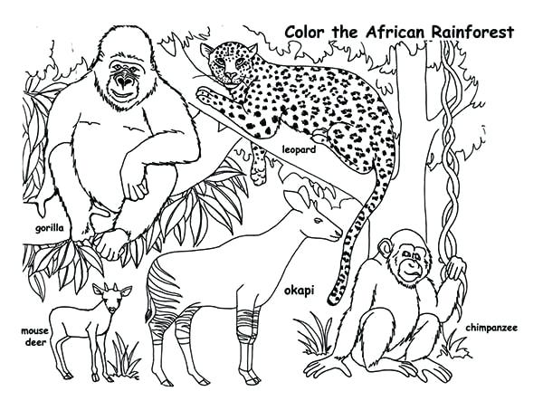 600x464 Rainforest Coloring Page Drawn Jungle Tropical Rainforest