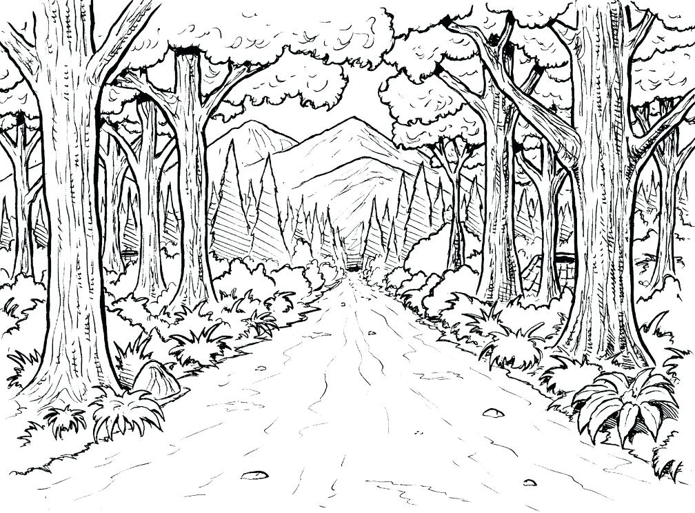 1008x744 Rainforest Coloring Page Forest Background Coloring Page Below Are