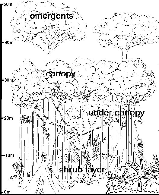 527x647 Best Rain Forest Images On Coloring Pages, Birds