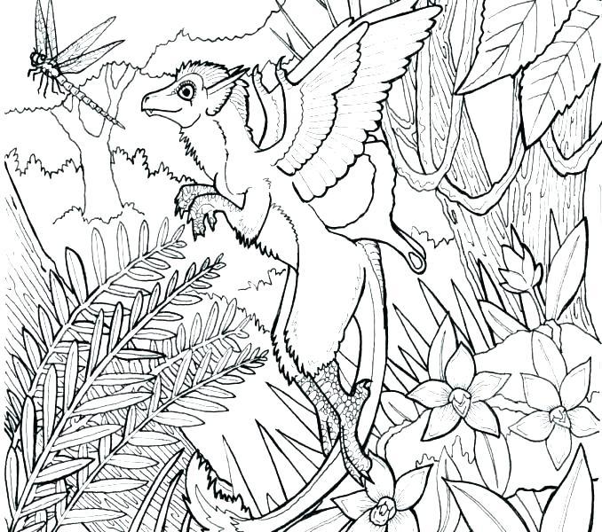 678x600 Rainforest Coloring Pages Kindergarten Kids Coloring Forest