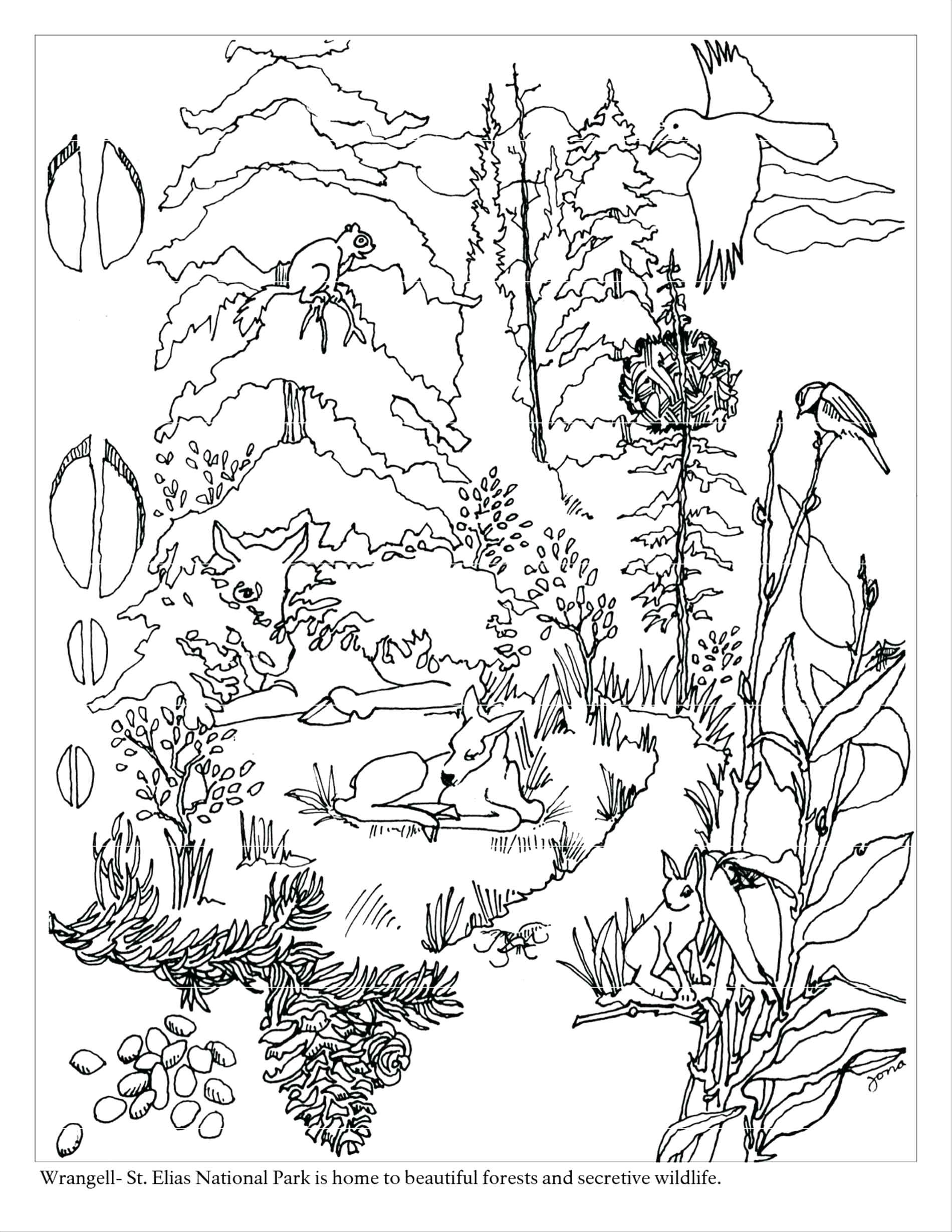 1900x2458 Rainforest Coloring Pages To Print Copy Free Printable Rainforest