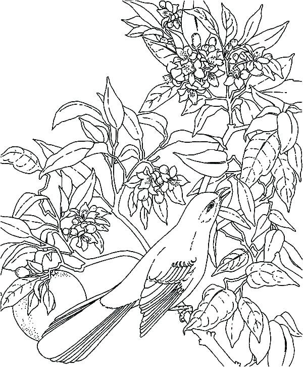 600x725 Rainforest Coloring Sheet Amazon Coloring Pages Coloring Pages