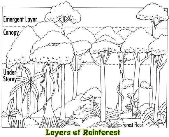 580x470 Best Rain Forest Animals Images On Animals