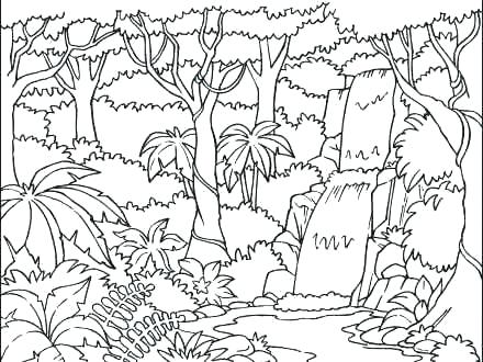 440x330 Rainforest Layers Coloring Pages Kids Coloring Coloring Pages