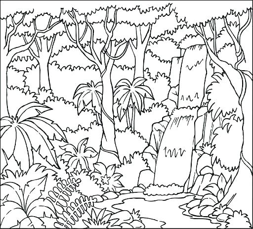 graphic relating to Layers of the Rainforest Printable named Levels Of The Rainforest Coloring Site at