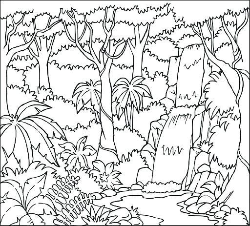 512x463 Rainforest Printables For Preschoolers Rain Forest Coloring Pages