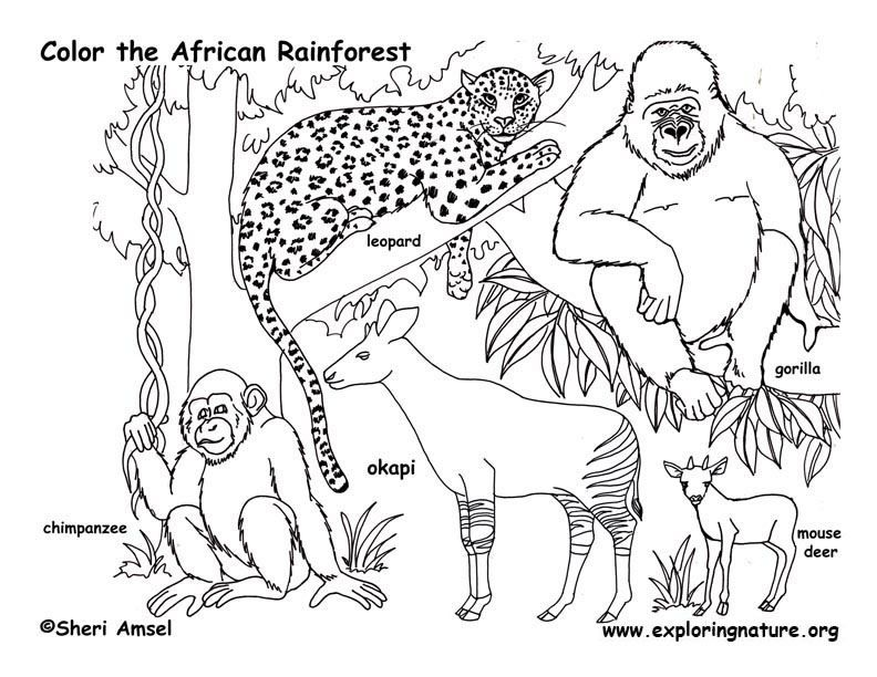 792x612 African Rainforest Animals Coloring Page Learning Is Fun