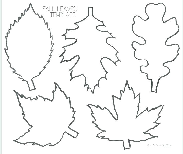 736x618 Fall Leaf Coloring Page Unique Free Printable Leaf Patterns Leaves