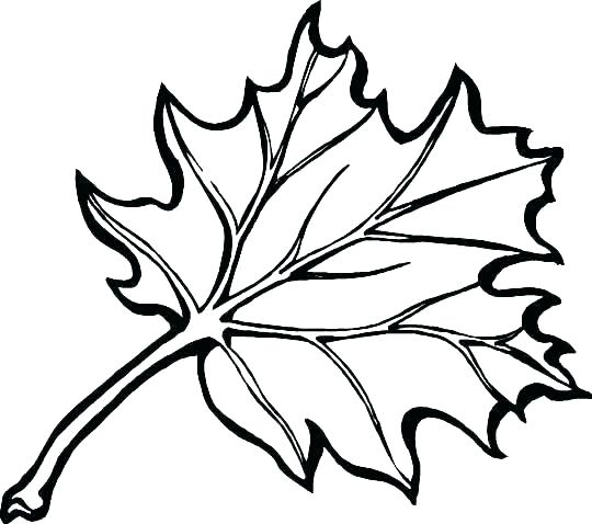 540x478 Leaf Coloring Pages Printable Coloring Pages Of Leaves Leaves
