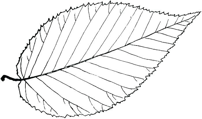 700x413 Leaf Coloring Template Leaf Coloring Pages Leaves Template