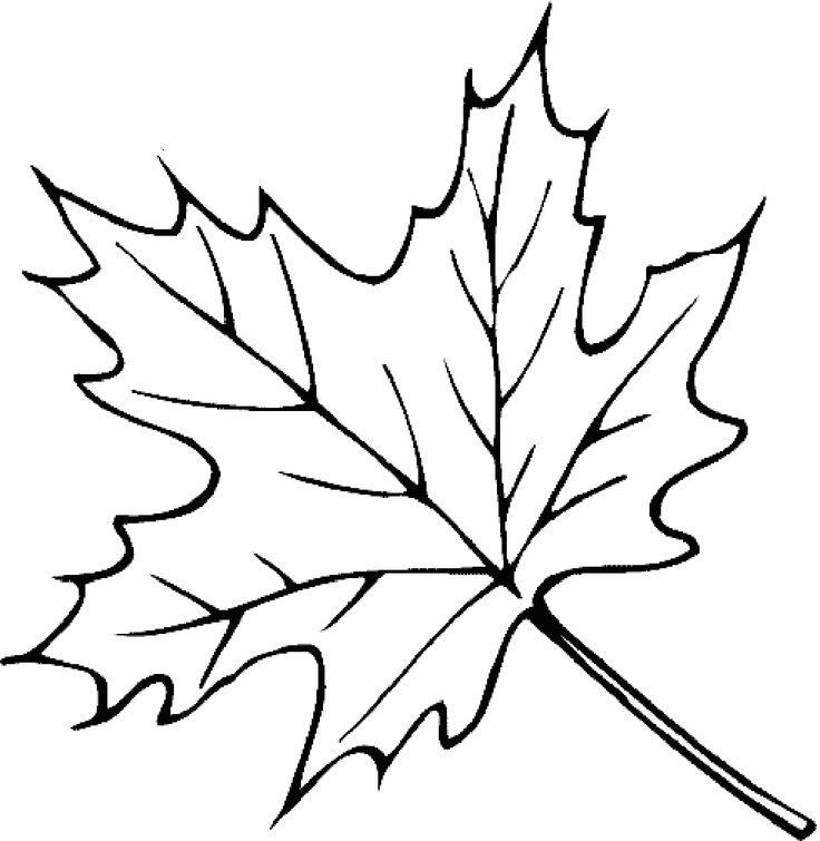 736x755 Mejores De Leaves Coloring Pages En