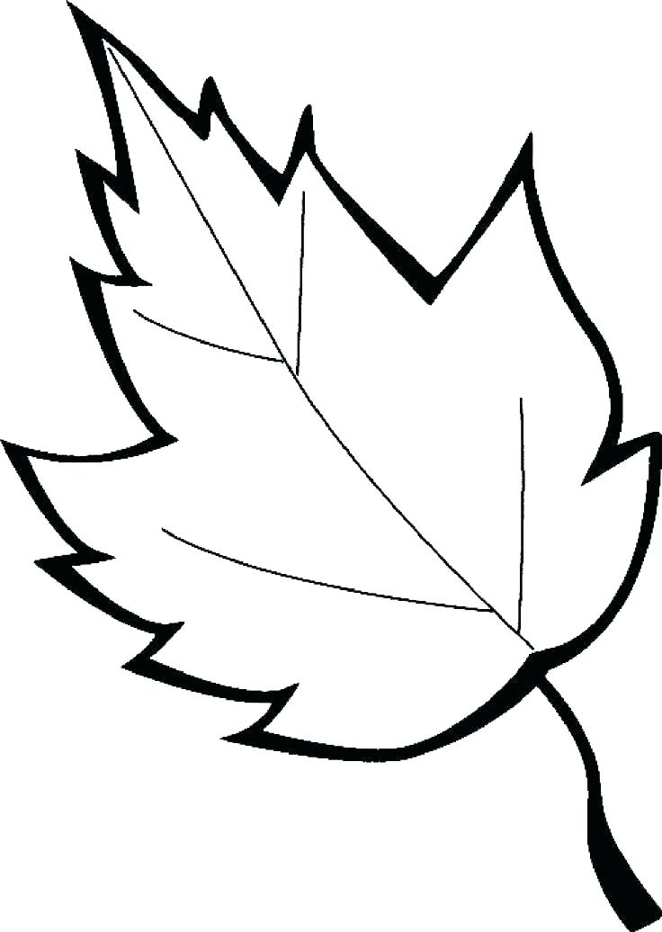 736x1036 Oak Leaf Coloring Page Leaves Coloring Sheet Leaves Coloring Pages