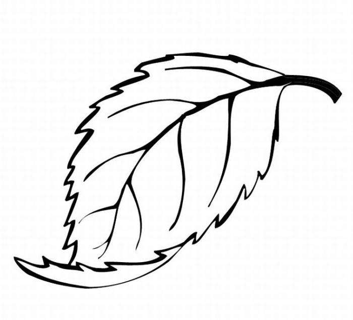 700x636 Oak Leaf Coloring Pages