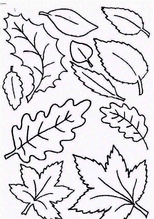 600x851 Type Of Autumn Leaf Coloring Page