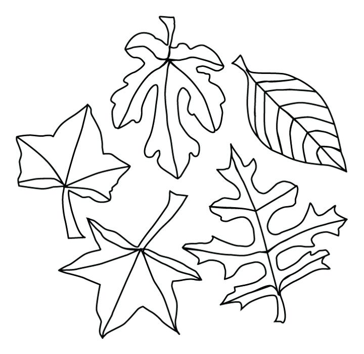 720x699 Autumn Leaves Coloring Page Fall Leaves Coloring Pages Best
