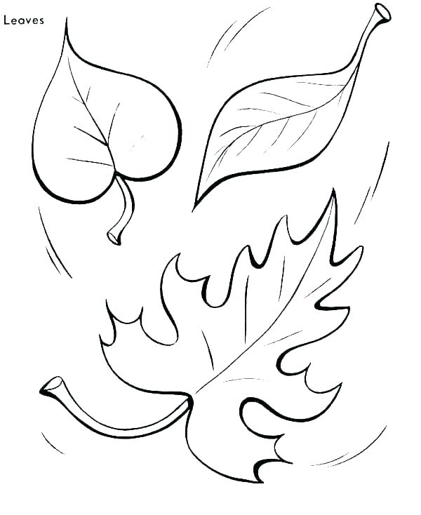 600x734 Fall Leaves Coloring Pages For Preschoolers Color Autumn Page Leaf