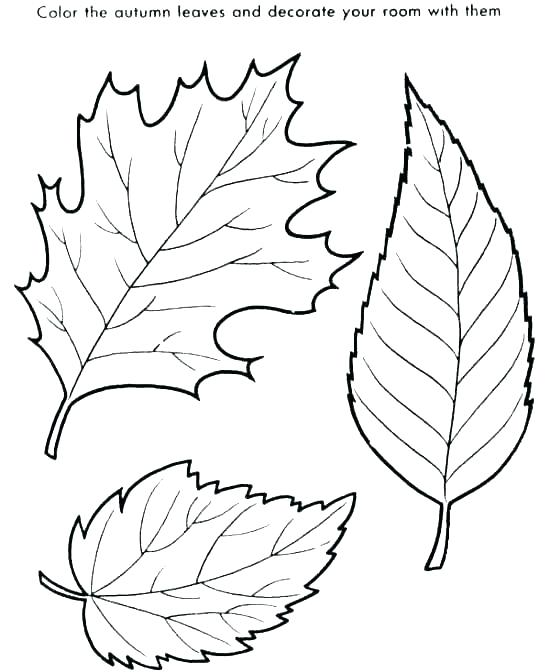 550x672 Leaf Coloring Page Big And Small Colori Pages Big Fall Leaves