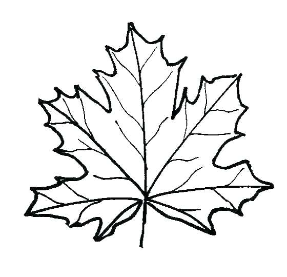560x540 Leaf Coloring Pages For Preschool Printable Autumn Coloring Pages