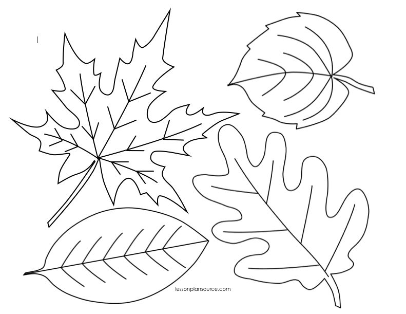 791x611 Autumn Leaves Coloring Page Preschool Leaves Coloring Page