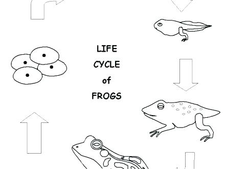 440x330 Leap Frog Coloring Pages Kids Coloring Sheet Printable Coloring