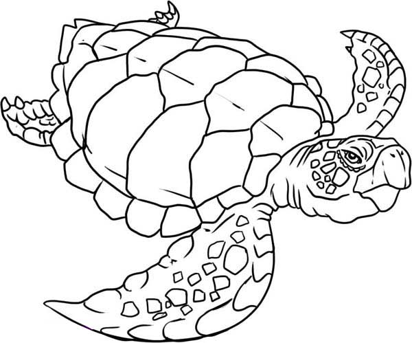 600x499 Dazzling Ideas Sea Turtle Coloring Pagesdult Baby Printable
