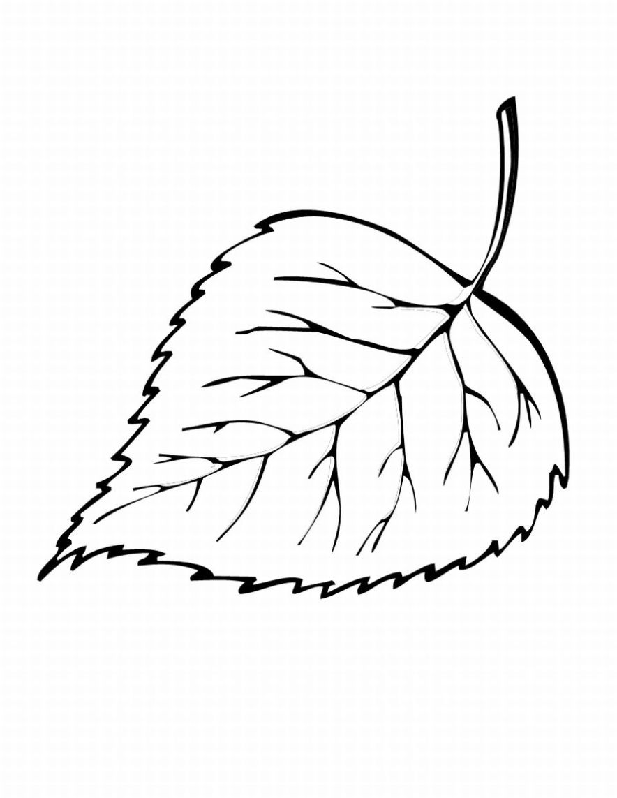 884x1143 Free Printable Leaf Coloring Pages For Kids