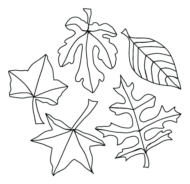 720x699 Leaf Coloring Pages Printable Autumn Leaf Coloring Pages Autumn