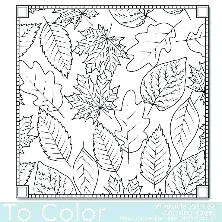 736x736 Leaf Coloring Pages Printable Leaves Coloring Pages Maple And Oak