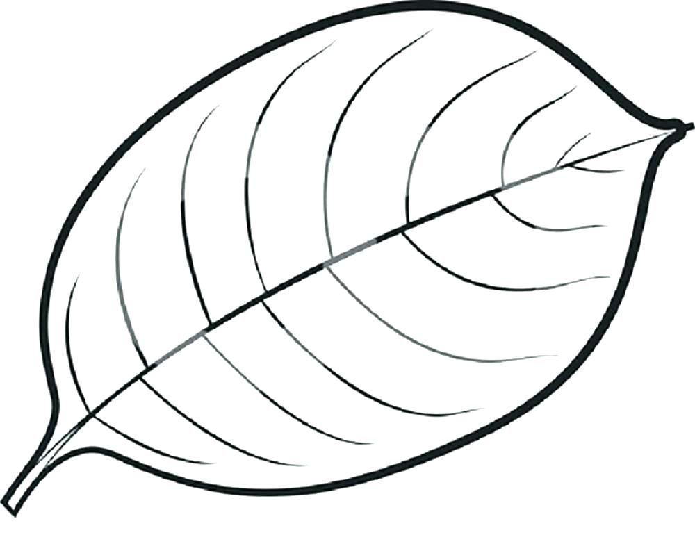 1000x783 Leaves Coloring Pages Download And Jungle Leaves Coloring Pages
