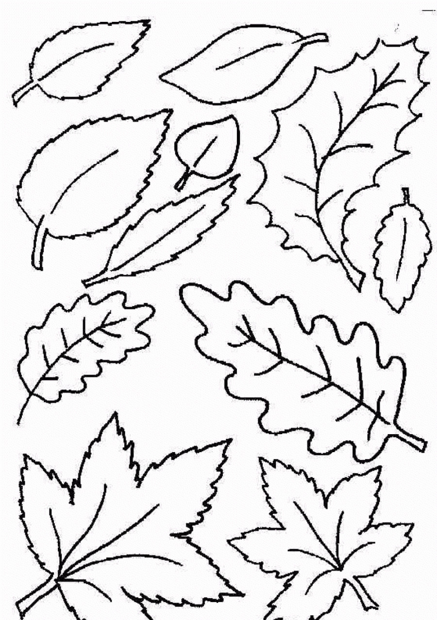 900x1278 Fall Leaves Coloring Pages Printable Acpra Leaves Coloring Pages