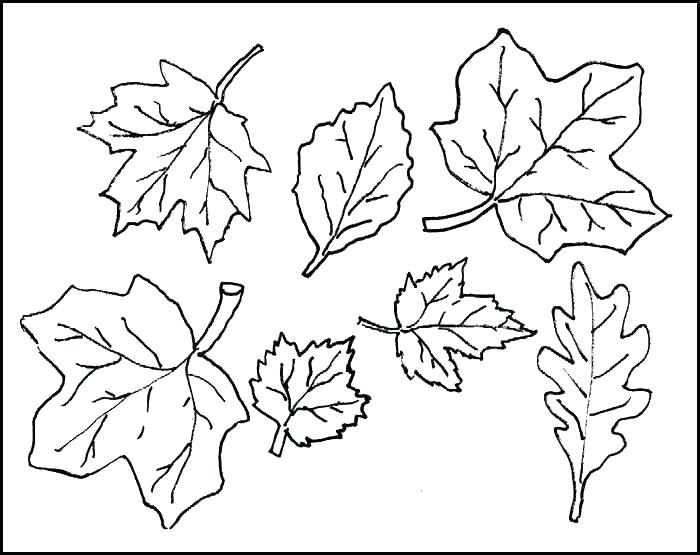 700x555 Coloring Page Leaf Coloring Pages Leaves Leaf Coloring Pages