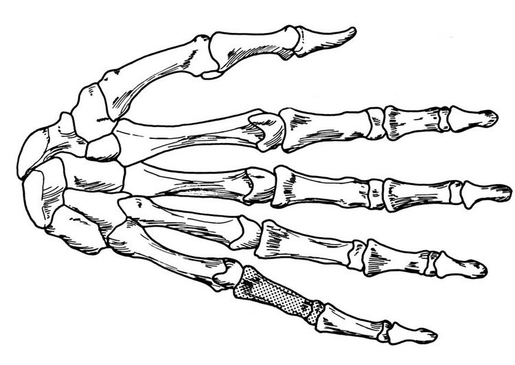 750x531 Skeleton Hand Coloring Page Hand