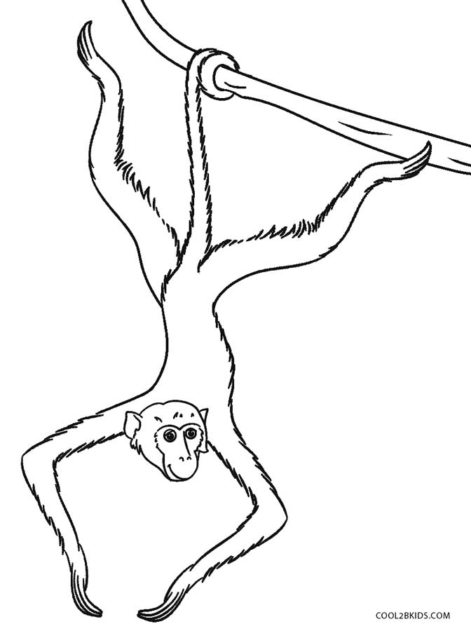 672x900 Free Printable Monkey Coloring Pages For Kids