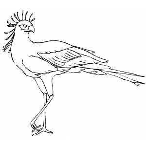 300x300 Secretary Bird On One Leg Coloring Page