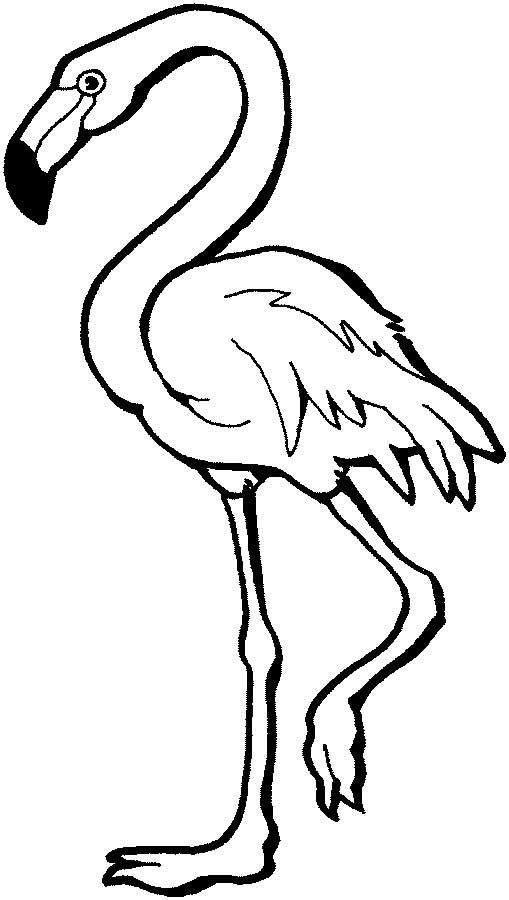 509x900 This Coloring Page For Kids Features A Flamingo Standing On One
