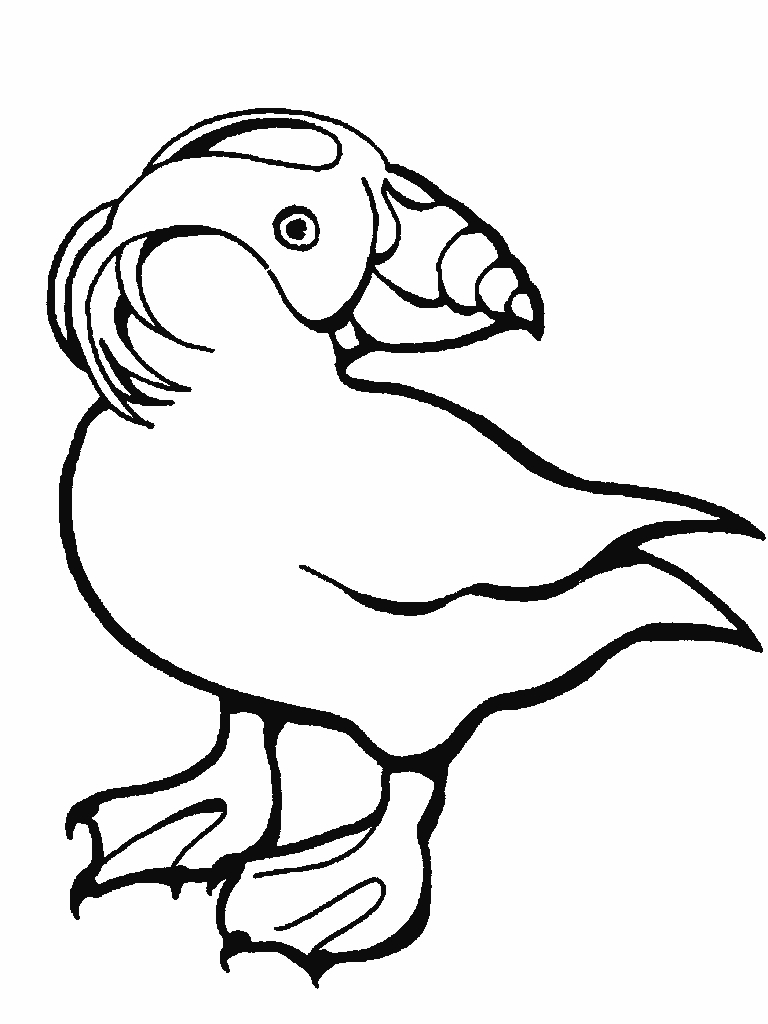 768x1024 Awesome Puffin Coloring Page Collection Printable Coloring Sheet